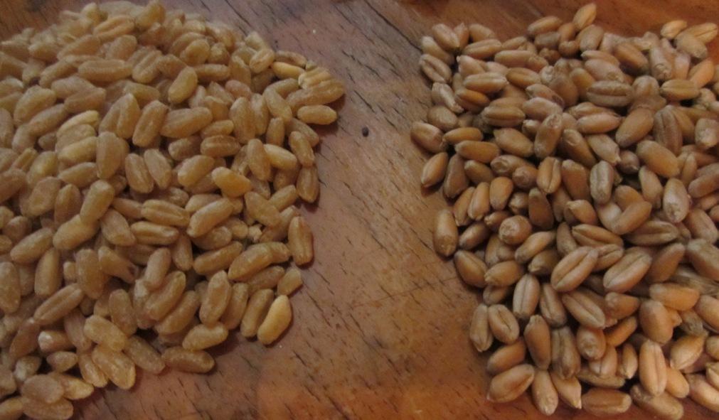 Отделять плевелы от пшеницы