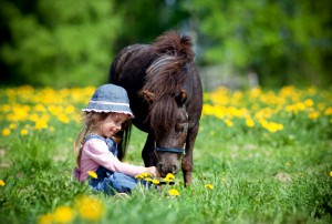 Child and small horse in the field