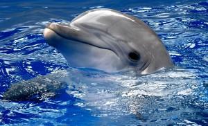 Дельфинотерапия для Артема
