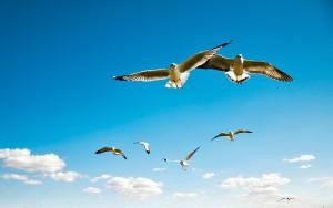 Жить как птицы небесные