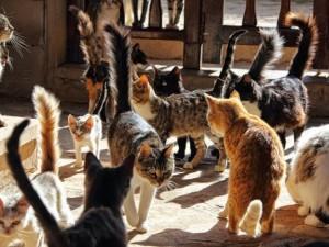 Святая Елена и кошки