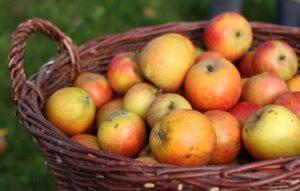 Чин освящения плодов