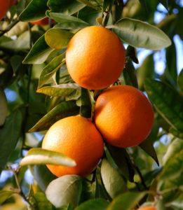 Лефкада - праздник освящения апельсинов
