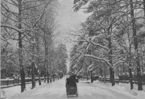 В Петровском парке