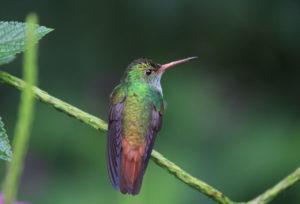 Протоиерей Владимир Гофман. «Одинокая птица на зеленой ветке»