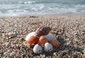 Летняя реабилитация на море для детей, победивших болезнь
